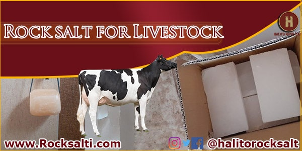supply livestock rock salt